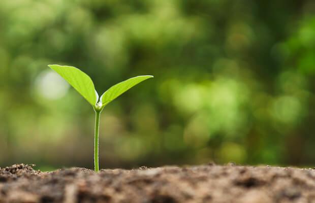 Paddy Power Betfair Growth