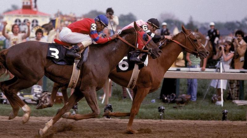 1978 Belmont Stakes Horse Alydar