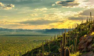 Arizona DFS